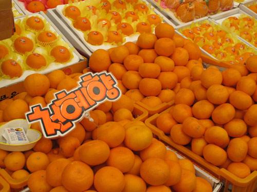 Jeju tangerines
