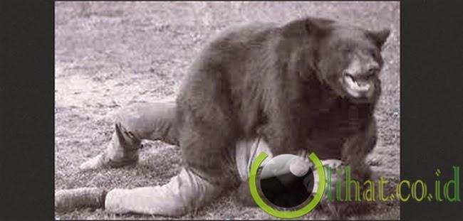 Larangan Berkelahi dengan Beruang