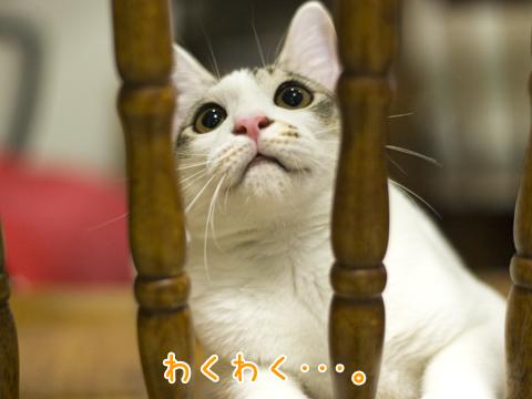 まつげがかわいい子猫