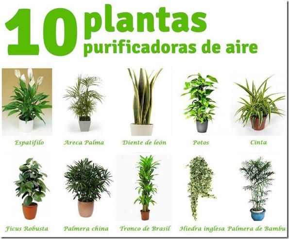 Mundoblog 10 plantas purificadoras de aire que te for Cuales son las plantas ornamentales