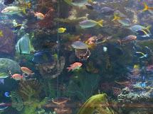The Aquarium at Mirage Las Vegas