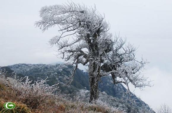 Tuyết phủ trên đỉnh Phía Oắc - Những địa điểm có tuyết tuyệt đẹp ở miền Bắc