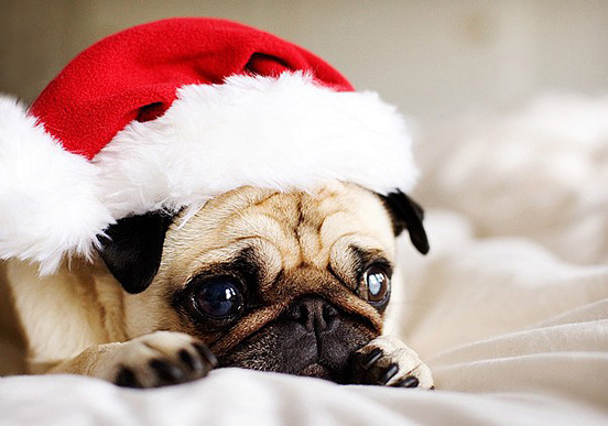 Cute Christmas Animal Pictures Dogs wallpaper 1080p
