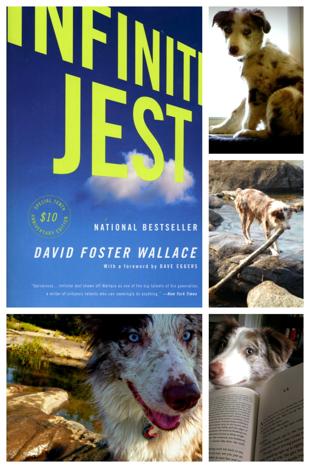 How My Dog Ruined Infinite Jest