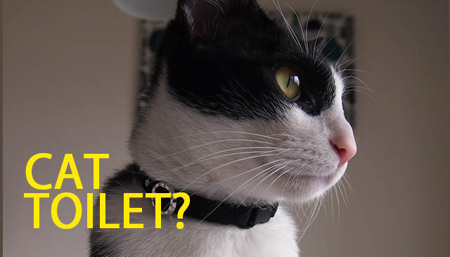 猫のおトイレのお掃除