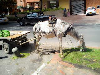 Un caballo pasta plácidamente en el norte de Bogotá. Foto: Jorge Bela