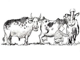 imagen graciosa de vacas