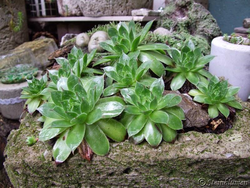 Gartendeko aus Beton