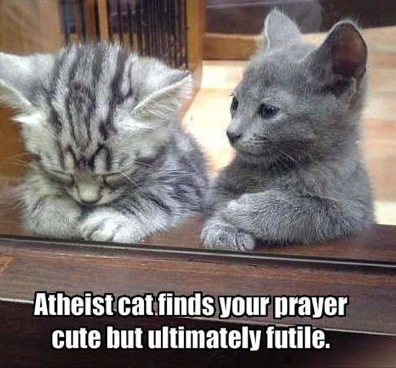 Atheist Cat Cats Kitten Kitty Pic Picture Funny Lolcat Cute Fun Lovely