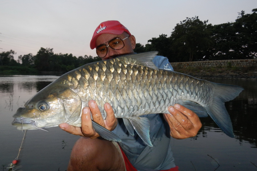 biggest fish in the world - photo #21