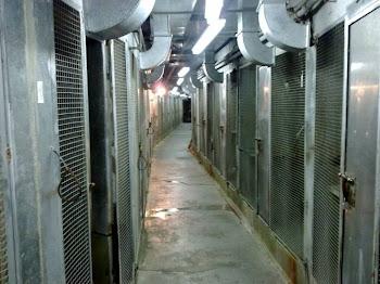 Zoo de Barcelona: un Guantánamo Animal