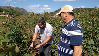 Produção de rosas tem apoio do Estado do Rio de Janeiro
