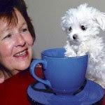 bintancenter.blogspot.com - Anjing Terkecil Di Dunia
