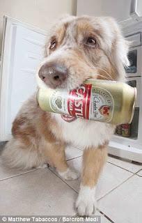 O cachorro que pega cerveja na geladeira