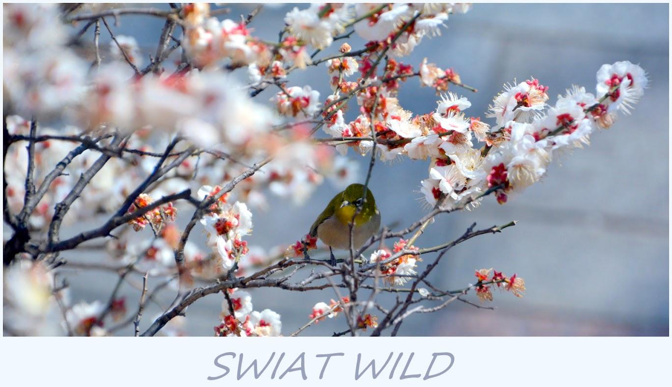 Swiat Wild