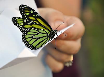 butterfly friendly husbandry