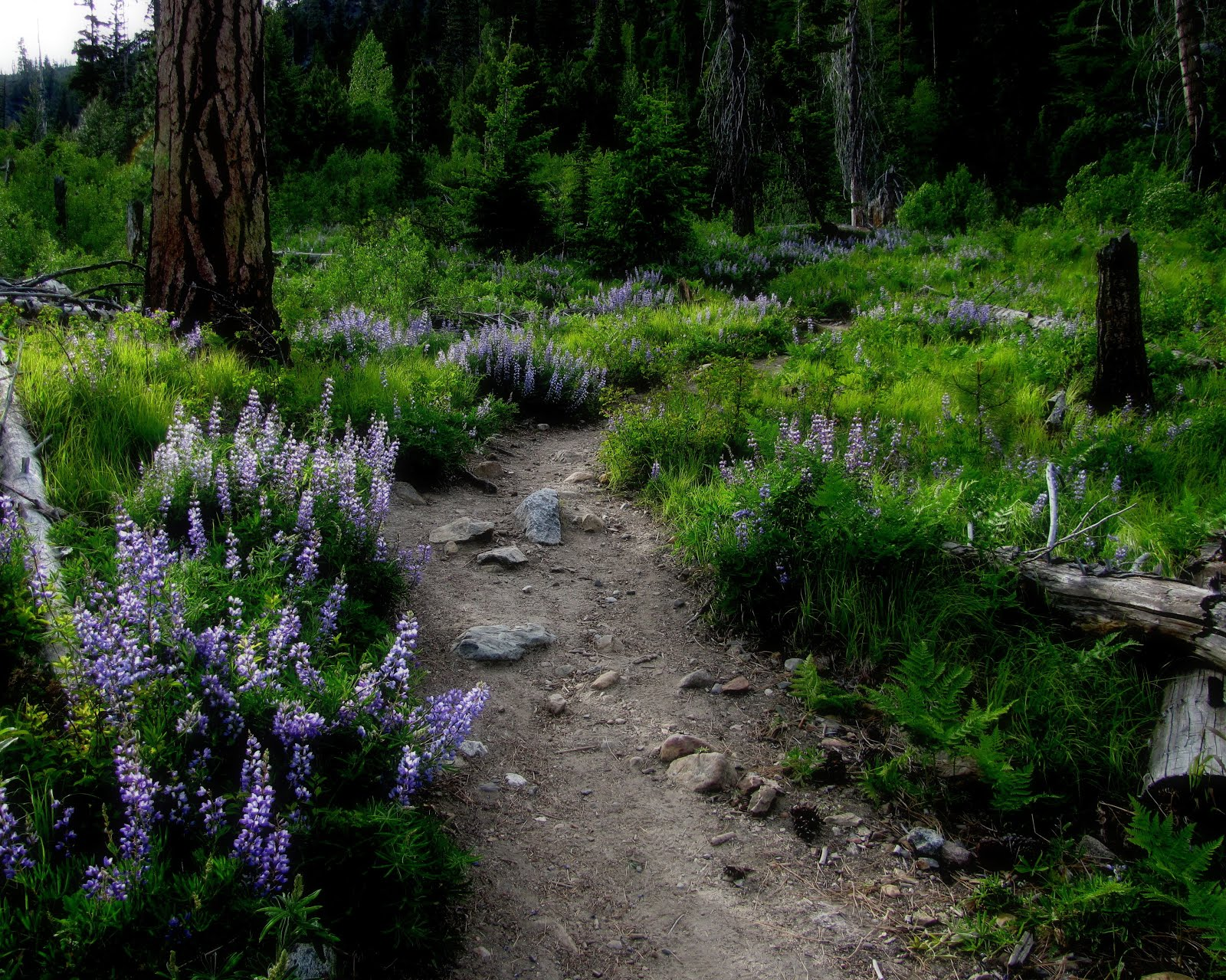 springtime in the enchantments