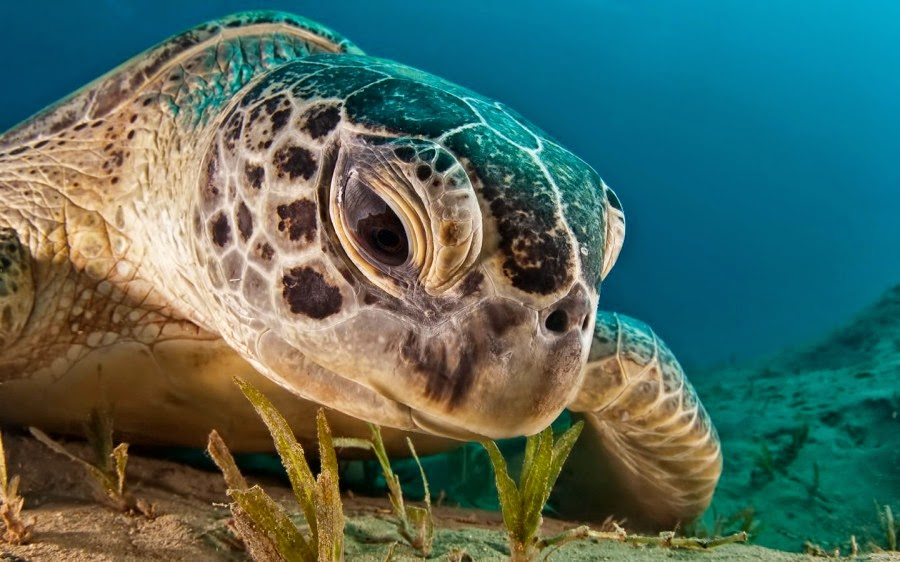 Astounding Pictures of Sea Turtles