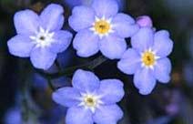 Horóscopo Flores - Origem Atlântida
