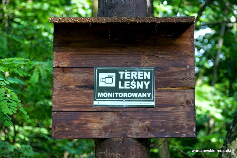 teren leśny monitorowany Warszawa Wola park las alejki tory kolej Trasa Toruńska drzewa zieleń plac zabaw