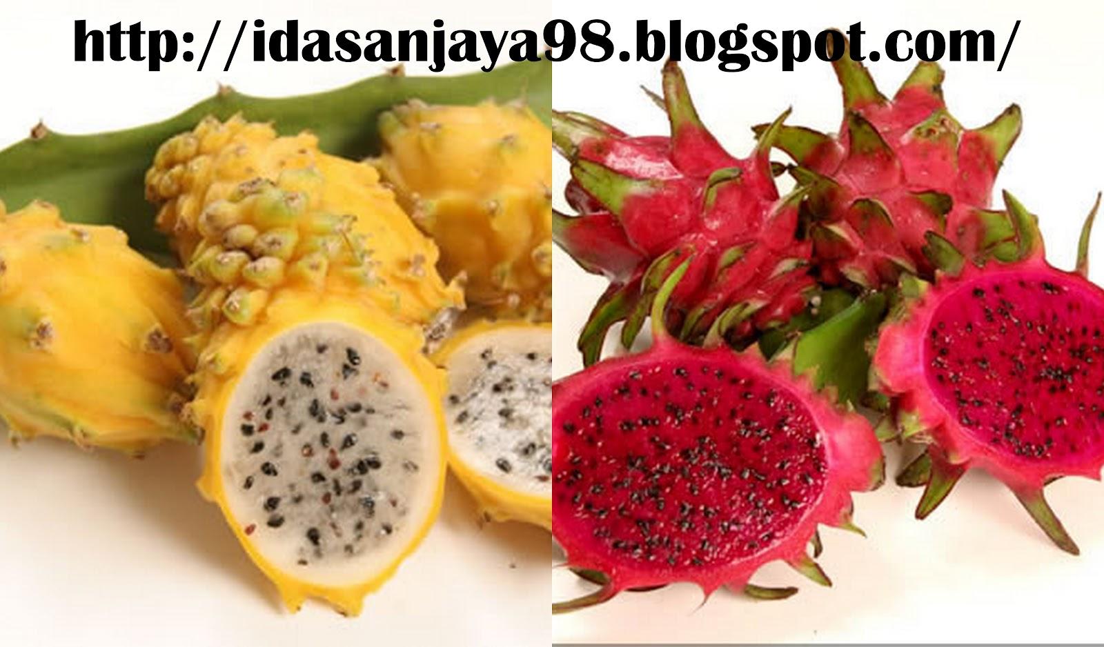 Ida Sanjaya Blogger Dragon Fruit Is Very Profitable Transactions