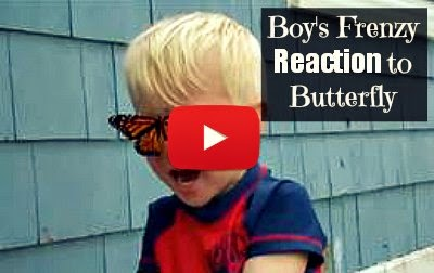 Watch this adorable Boy's frenzy Reaction to freed butterfly landing on his nose  via geniushowto.blogspot.com adorable reaction videos