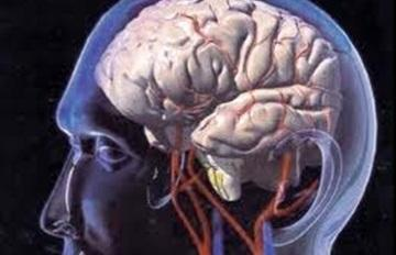 رجل يعيش 15عاما بقلم داخل الجمجمة - لعقل المخ البشرى تشريح تشريحى - human brain skull