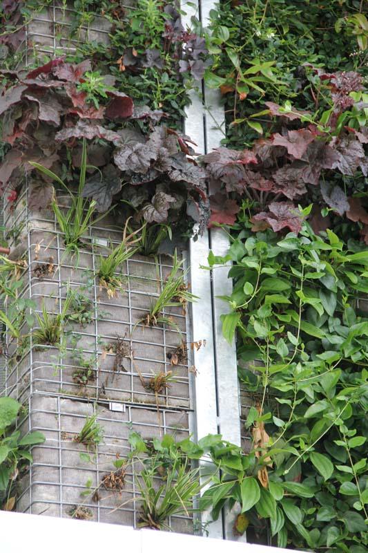Horizontaler Garten mein balkon ungewöhnliche pflanzgefäße vertikale gärten