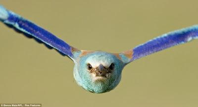 مجموعة مميزة من صور الحياة البرية Wildlife Photos للمصور العالمي بينس ميت