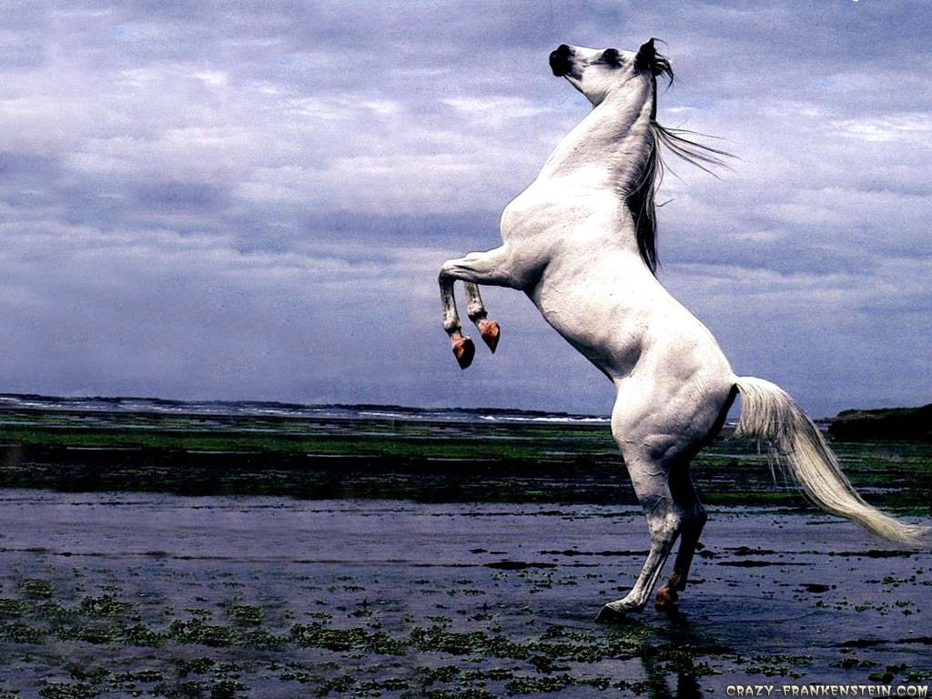 wallpaper 8 horses