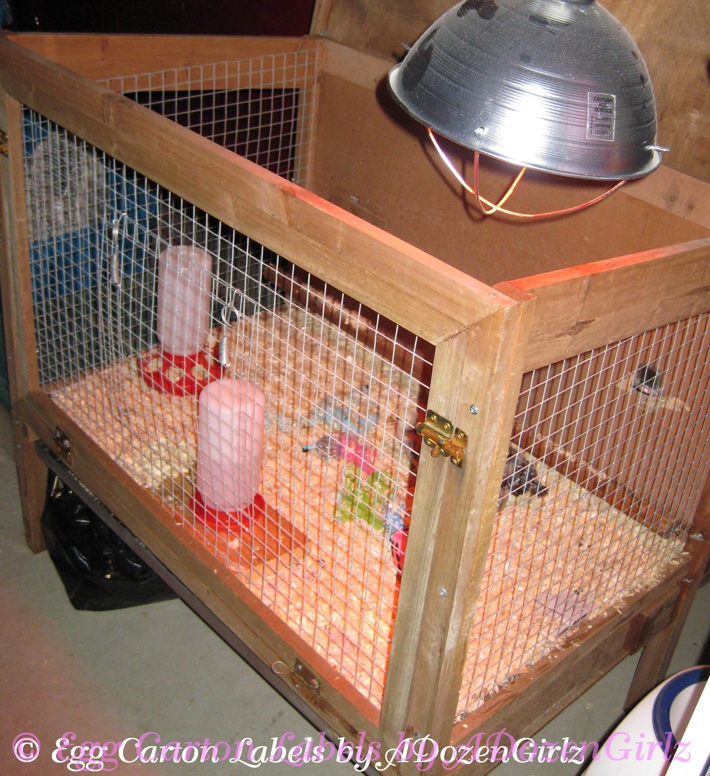 heat lamp in rabbit hutch brooder. Black Bedroom Furniture Sets. Home Design Ideas