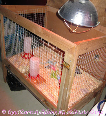 Heat lamp in rabbit hutch brooder.
