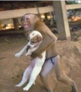 funny picture monkey lifts dog