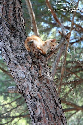 Cats Plaka Antimachia