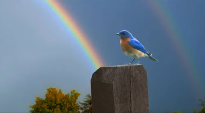 blue bird of happiness, on a fence post with a rainbow in background, k-pax