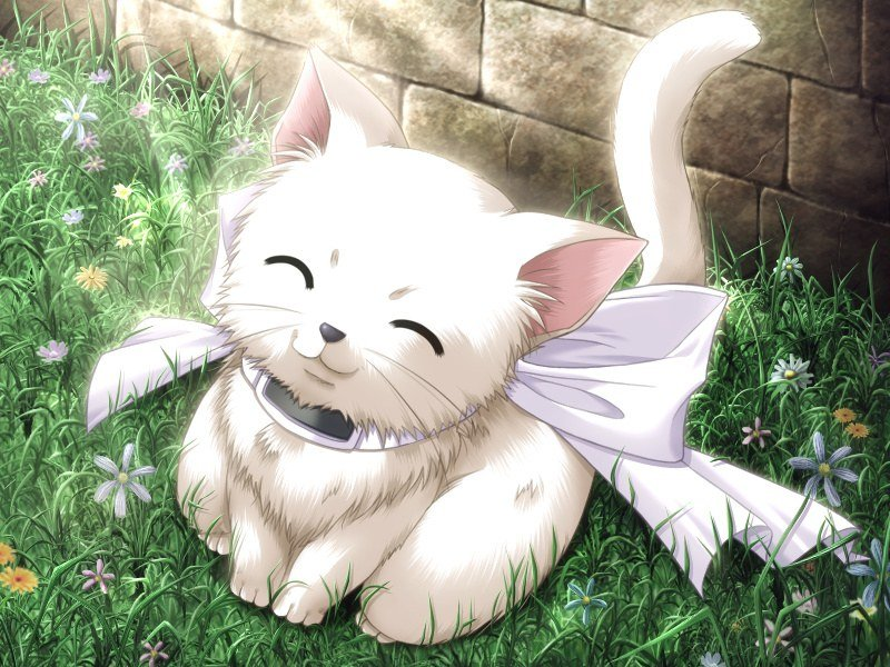 cute anime kitten