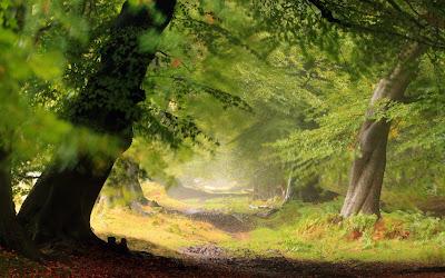 Tổng hợp hình nền thiên nhiên đẹp cho máy tính full HD 28