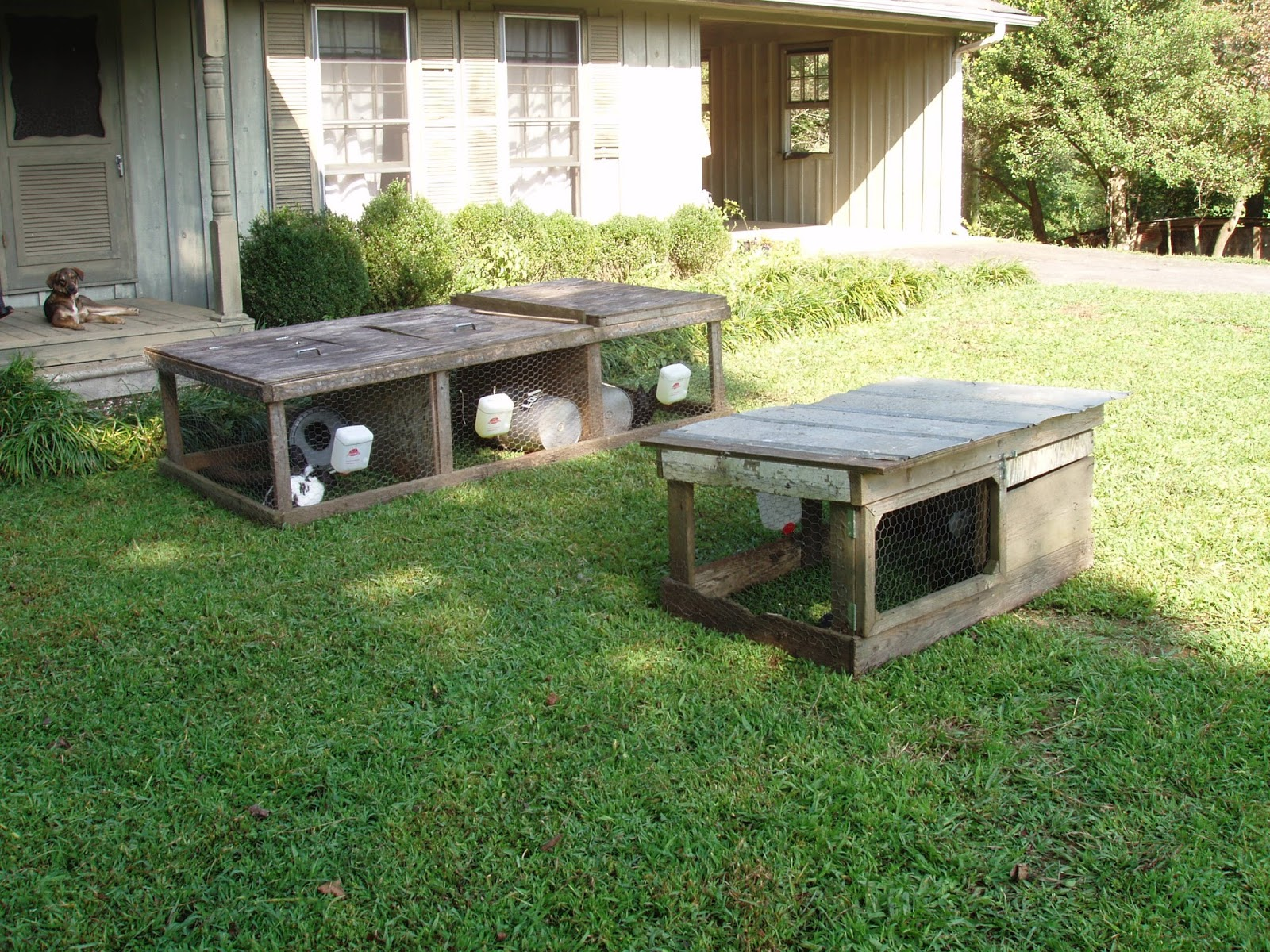 small batch garden rabbit powered lawn