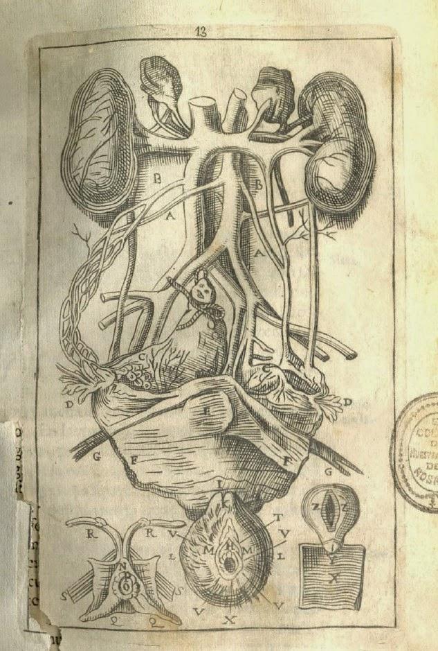 Hermosa Da Vinci Dibujo De Anatomía Friso - Anatomía de Las ...
