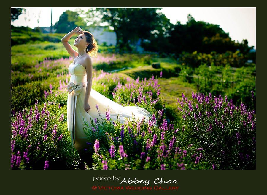 Abbey Choo Victoria Wedding Gallery Taiwan Wedding Photo 9