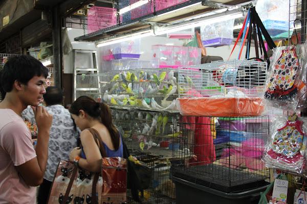 Tiendas de animales en el Mercado de Chatuchak de Bangkok