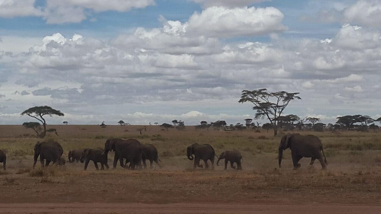 Inside Serengeti National Parktanzania on Animals And Their Habitats