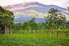 Panorama Kebun Teh Wonosari Lawang