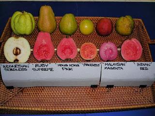 فائدة الجوافة وانواعها