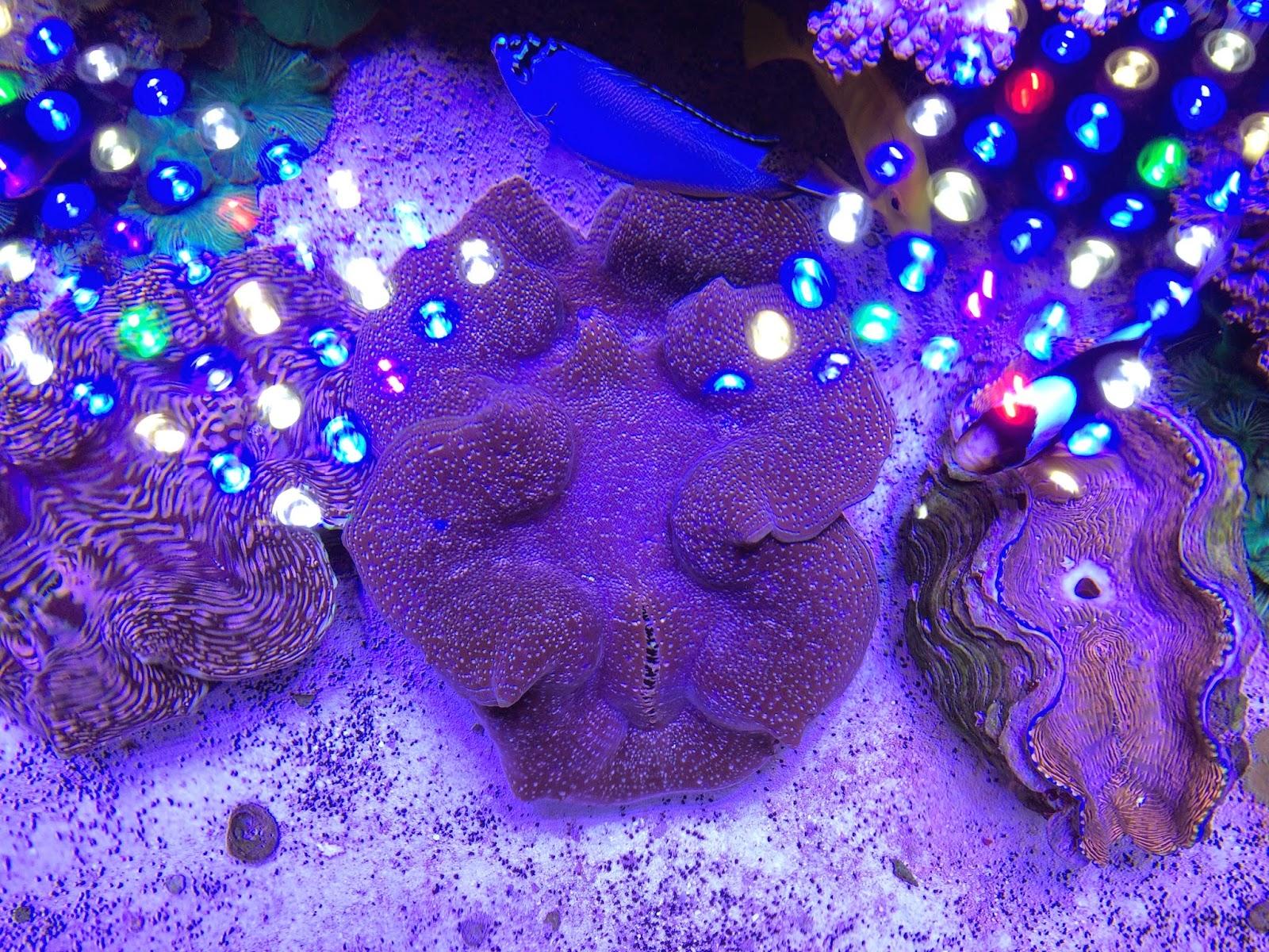 LED light reflecting on a REEF aquaria