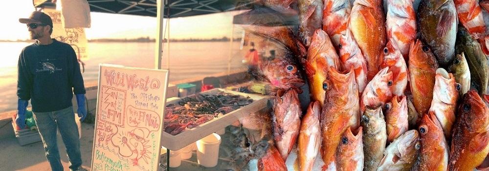 Wild West, coastal rockfish, variety rockfish, local seafood, Tuna Harbor Dockside Market