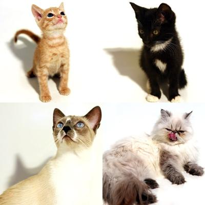 Veja nossos gatos para adoção