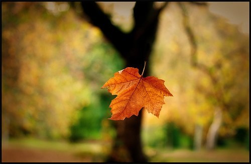 ilustrasi daun jatuh