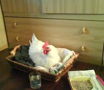 Animali salvati: Caterina dormiva nella mia stanza !