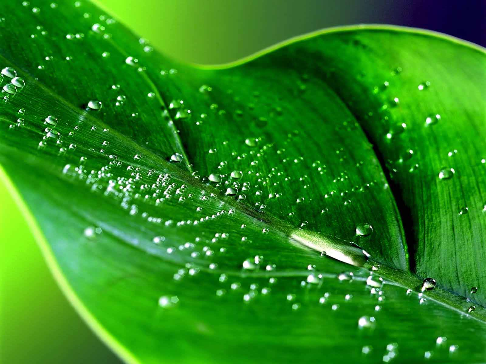 Must see   Wallpaper Home Screen Rain - HD+Rain+Wallpapers8  Picture_761183.jpg